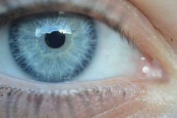 Blue Eye Close Up